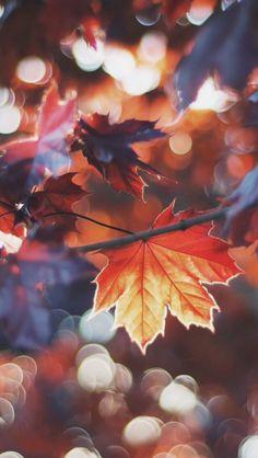 enchantedbgs:  Autumn lockscreens •like if u save/use