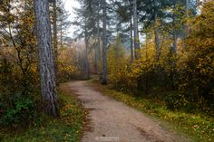 """Autumn Forest Path - Autumn Forest Path in the forest around lake 'Reindersmeer' on a misty autumn morning at 'De Maasduinen' National Park, Well, Netherlands.   If you like my work you can also follow me at <b><a href=""""https://www.facebook.com/williammevissenphotography"""">facebook</a></b>, <b><a href=""""https://instagram.com/williammevissen/"""">instagram</a></b>, <b><a href=""""https://twitter.com/williammevissen"""">twitter</a></b> and <b><a…"""