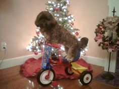 I got a bike for Christmas!