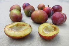 How to make plum #Jam - CSMonitor.com