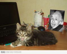 Albert Einstein's cat!