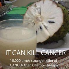 "The Sour Sop or the fruit from the Graviola tree is a miraculous natural cancer cell killer 10,000 times stronger than Chemo.  The National Cancer Institute performed the first scientific research in 1976. The results showed that Graviola's ""leaves and stems were found effective in attacking and destroying malignant cells."