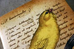 Canary bird journal vintage style illustration by GuBoArtBook,