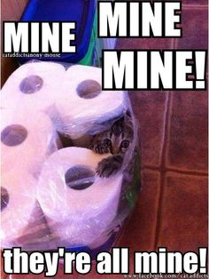 http://www.facebook.com/cat.addicts Knowing mew haz a pawblem is the furst step... ****THE PURRENITY...