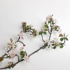 In Japan blossom symbolises clouds and is a metaphor for the ephemeral nature of life. Unfortunately blossom season in the uK is short lived although they also include the beautiful blossom from fruiting trees.