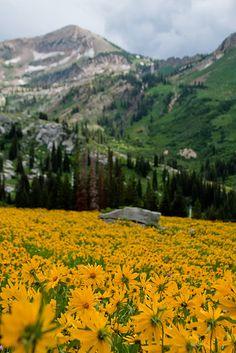 "photo by Kate Johns, Albian Basin, Utah, ""Secret Lake"" hike"