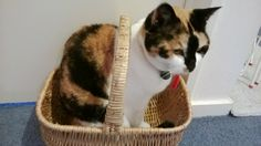 Calico's Strategic Thinking Tip #5 Put yourself in one basket (niche) to see quicker, better results - even if it feels a bit restricted at first!