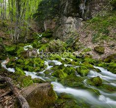 Green stream © Anton Zagorulko