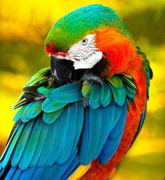 Eyeballing  What glorious colors