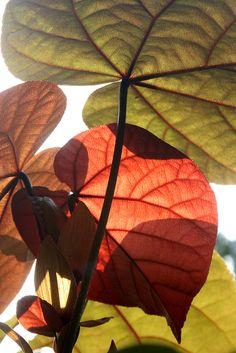 Patterns on leaves by ranmali_k, via Flickr