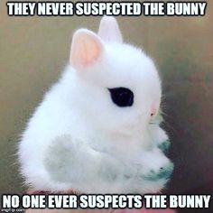No ever suspects the bunny.