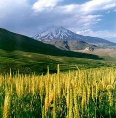 Iran - Wikipedia, the free encyclopedia