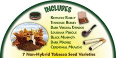 The seed list from our Tobacco Pack. Tobacco Pack $59