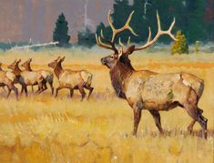 The Jackson Hole Art Auction is recognized as one of the premier art and auction events in the country, specializing in renowned past masters and contemporary western, wildlife, sporting, figurative and landscape art. Wildlife Paintings, Wildlife Art, Animal Paintings, Deer Art, Feather Painting, Soul Art, Indigenous Art, Fauna, Western Art