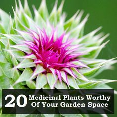 20 Medicinal Plants Worthy of Your Garden Space