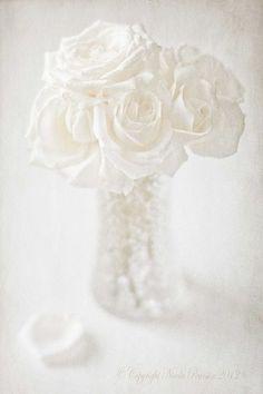 ♀ White Flower / Flower Macro / white vase