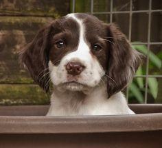 Puppy in a Wheel Barrel