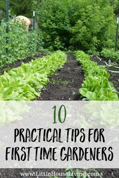 10 Practical tips for first time gardeners that you need to know before you start!