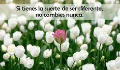 Buen día para todos! En #FloreriaMiztli creemos firmemente que ser diferente es nuestro sello característico.