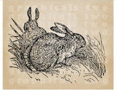 Rabbits Woodland animals Instant graphic digital download image transfer for iron on fabric burlap decoupage paper pillow card tote No gt223 digital download iron on transfer fabric transfer downloadable image woodland animals instant download graphic download image for pillows image for decoupage image for burlap image transfer instant graphic wild rabbit image GraphicalsTwo 1.25 USD
