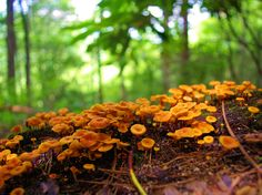 mushrooms along a hiking trail in the NC mountains - see our top 50 hikes