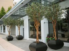 Planters unusual shape repined by www.claudiadeyongdesigns.com love the olive trees !!!