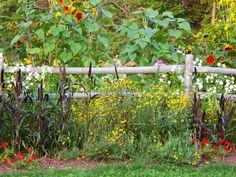Perennial Plants & Flowers | Gardening Tips | Garden Guides