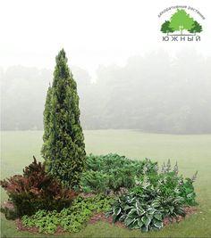 """Растения подобраны по принципу контраста формы кроны: у Туи западной """"Колумны"""" крона узкоколонновидная с темно зеленой хвоей, у Можжевельника виргинского """"Хетз"""" - распростертая с сизо зеленой хвоей. Ярким акцентом в группе служит Барбарис тунберга """"Атропурпуреа"""" с темно-красными листьями или Спирея японская """"Голден принцесс"""" с желтой окраской листьев. Дополняют композицию: Хоста, Астильба, Манжетка, а также отсыпка декоративной щепой или корой."""