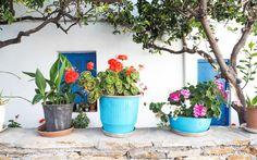 © Carina Dieringer Planter Pots, Greek Islands, Greece, Tips