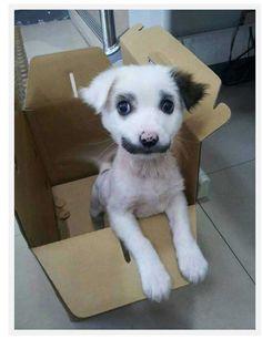 #puppystache #grouchomarks