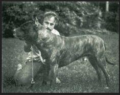 A half-century ago, John Swinford decided to re-create the Bandog, a modern medieval guard dog. Here's how he did it. Modern Molosser  |  www.modernmolosser.com
