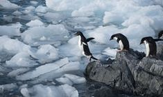 First images of creatures from Antarctic depths revealed   Environment   The Guardian
