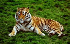 Sikkim Wildlife 7 Nights Package
