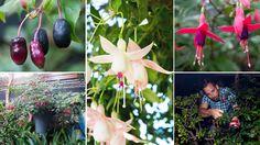 Fuchsia Fanatics: The Fancy Plants of Late Summer