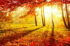 Lumiere d'automne