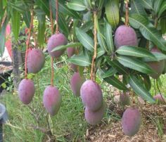 Fruit Trees Need to Be Cared For | gardening tips