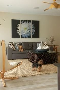 Corrected May 2012 Small 30 - Modern - Living room - Images by Dawn Elise Interiors   Wayfair