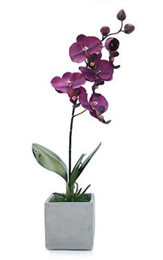 Artificial Potted Plant - Orchid in Stone Pot - Office, House Indoor Plant (Purple) BrandSaver http://www.amazon.co.uk/dp/B00V54TU9M/ref=cm_sw_r_pi_dp_k2eFvb046BB3Z