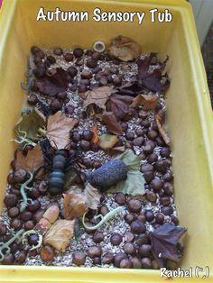 Autumn Sensory Tray - from Rachel (,) Fall Preschool Activities, Nursery Activities, Sensory Activities, Harvest Crafts, Autumn Crafts, Sensory Tubs, Sensory Play, Tree Study, Tuff Tray