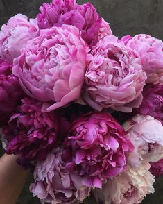 Peonies Delivery, Flower Delivery, Blush Peonies, Peonies Bouquet, Where To Buy Peonies, Amazing Flowers, Beautiful Flowers, Peonies For Sale, Peonies Season