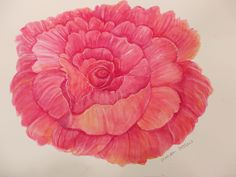 Pink Peony Watercolors Paintings original, peony flower ART, floral art watercolor, watercolor painting of pink peony by SharonFosterArt on Etsy