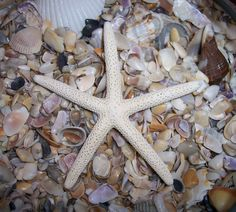 Nautical Décor Constructive 10 Pieces Mini Starfish Crafts Nautical Decor Aquarium Decorations Glow In Dark High Standard In Quality And Hygiene Decorative Collectibles