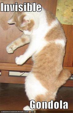 25 Cats vs. Invisible Objects – Holytaco