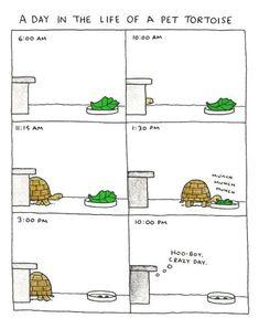 funny cartoon pet tortoise