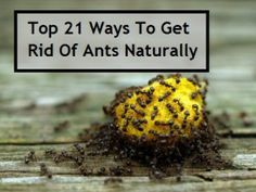 If ants have been bothering you for quite a while now, and nothing seems to keep them at bay, you could consider trying out some of the best-known natural remedies to keep these tiny (yet capable enough to give you a lot of trouble) creatures away.