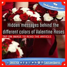 Hidden messages behind the different colors of Valentine Roses