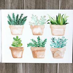 It was about time for some succulents •  •  •  •  •   #watercolor #artoftheday #succulent #succulents #watercolorpainting #bohemian #boho #diy #cacti #desert #desertchic #flashesofdelight#bohochic #design #watercolorpainting #homedecor #instaartist #floralwatercolor #botanical  #makersgonnamake #pricklypearpaints #prettythings #sanclemente #orangecounty #artistsoninstagram