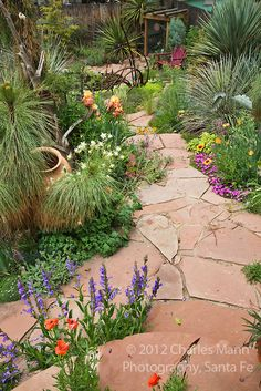 Penstemons, columbines, iris and iceplant are among the many blooming plants that embellish the flagstone path to the lower pond in Dan Johnson's backyard garden in Denver, Colorado Colorado Landscaping, Landscaping With Rocks, Backyard Landscaping, Landscaping Ideas, Backyard Ideas, Landscape Design, Garden Design, Landscape Fabric, Flagstone Path