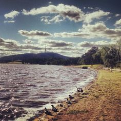 We love this photo of Lake Burley Griffin in Canberra by Ladygalla | Statigram – Instagram webviewer