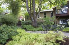 Shaded patio | Hakon grass | Oakleaf Hydrangea | Ferns | Japanese Maple \ Bamboo | Epimedium | Lace Cap Hydrangeas